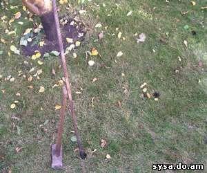 летняя подкормка дерева