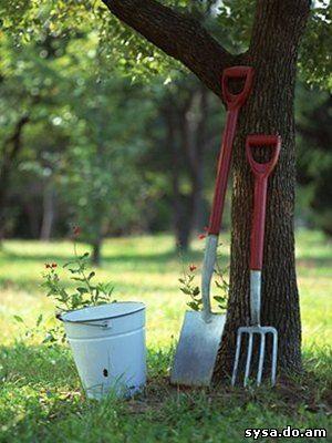 удобрение плодоносящего сада