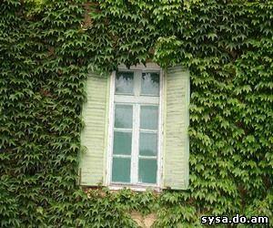 окно в чистый мир