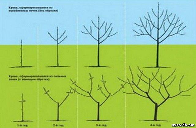 кронирование деревьев с обрезкой и без нее
