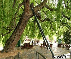 подпорки ветвей дерева