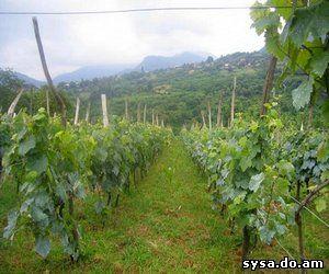 внекорневая подкормка винограда кубанские виноградники