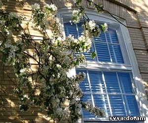 окно яблоневый сад